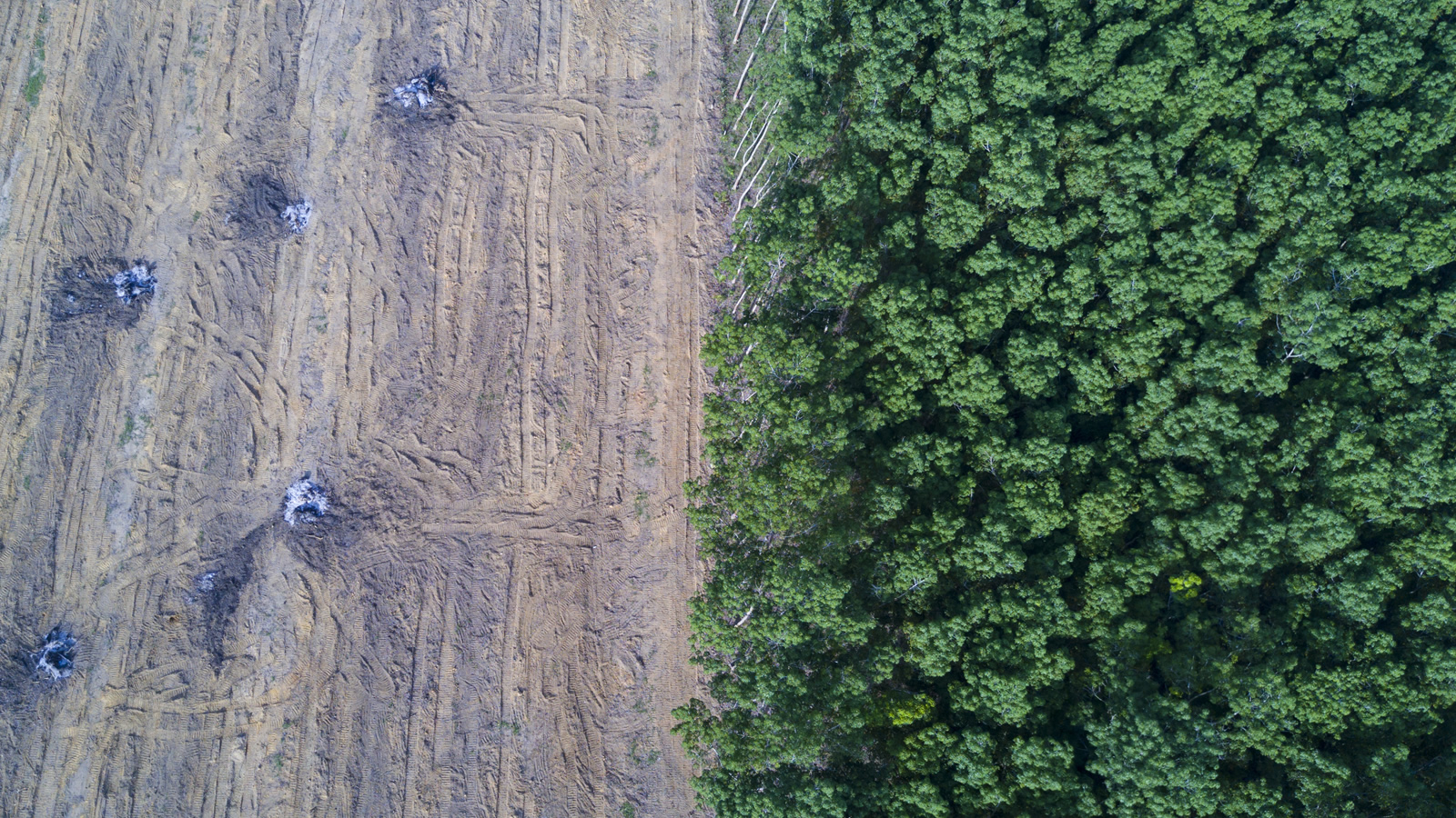 <h4>U.S. COMPANIES CAN LEAD</h4><h5>U.S. agricultural companies such as Cargill should commit to zero deforestation in tropical forests. Tissue brands such as Bounty and Charmin should include post-consumer recycled paper in their products, or choose alternative fibers such as wheat straw.</h5><em>Rich Carey via Shutterstock</em>